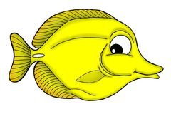 Yellow tang fish. Color illustration of yellow tang fish Royalty Free Stock Images