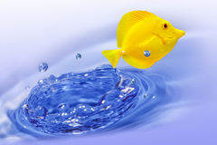 Yellow tang fish. Jumping out of water Stock Images