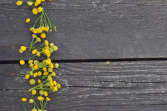 Yellow tansy flowers. On a wooden background royalty free stock photo