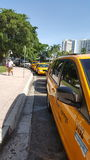 Yellow taxi Miami. These taxis are waiting for passenger outside the     bayside Miami Stock Images