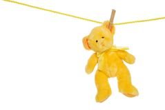 Yellow teddy bear on clothes line. Isolated Yellow teddy bear on clothes line with white background royalty free stock image