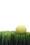 A yellow tennis ball green grass Royalty Free Stock Photography