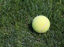 Yellow tennis ball on green grass Royalty Free Stock Photography