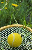 Yellow tennis ball is on the racket in the grass Royalty Free Stock Images