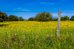 Yellow Texas Wildflowers in Field with Old Fence Stock Photography