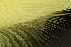 Yellow textured feather close up Royalty Free Stock Image