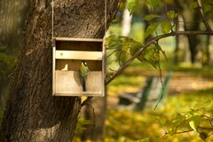 Yellow tit on the bird feeder with an Autumn park  Royalty Free Stock Photo