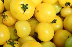 Yellow tomato Stock Photo