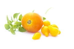 Yellow tomatoes and basil Royalty Free Stock Image
