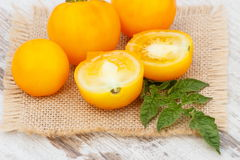 Yellow tomatoes with green leaves in garden on sunny day Royalty Free Stock Image