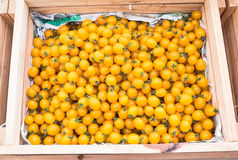 Yellow tomatoes Royalty Free Stock Photography