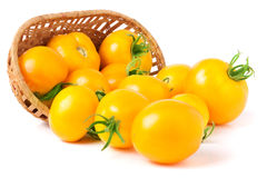 Yellow tomatoes spilled from a wicker basket isolated on white background Royalty Free Stock Image