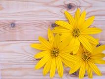 Yellow topinambur flowers on the planks background Stock Photos