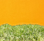 Yellow torn paper over grass closeup Stock Photography