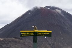 Yellow tourist guidepost sign on the great walk Tongariro Alpine Crossing. In the background active volcano Mt Doom, Mt Nguarahue. stock photography