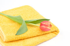 Yellow towel and tulip Stock Photo