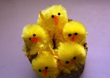 Yellow toy chicks in a basket stock images