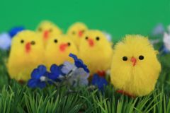 Yellow toy chicks on grass Royalty Free Stock Images