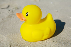 Yellow toy duck stock image