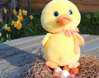 Yellow toy duck sitting on eggs in a nest. Stock Photo