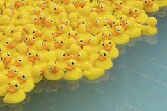 Yellow toy duck. Floating in swimming pool stock photography
