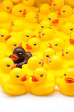 Yellow toy ducks Royalty Free Stock Photos