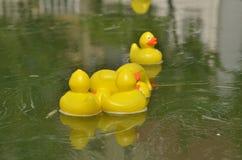 Yellow toy ducks on water Stock Photos