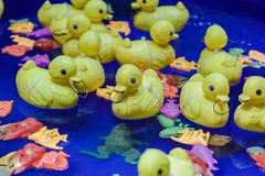 Yellow toy rubber duck family floats in the water. stock photography