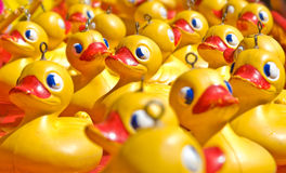 yellow toy rubber ducks  Royalty Free Stock Photo