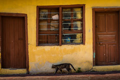 Yellow Traditional Turkish House Royalty Free Stock Photography
