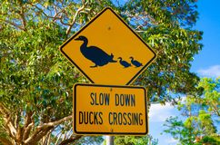 Yellow Traffic sign for Slow down duck crossing. A Yellow Traffic sign for Slow down duck crossing stock images