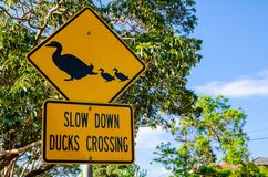 Yellow Traffic sign for Slow down duck crossing. A Yellow Traffic sign for Slow down duck crossing royalty free stock photos