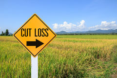 Yellow traffic sign text for stop loss and green paddy rice back Stock Images