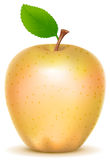 Yellow transparent sort apple with green leaf. Isolated on white vector illustration Stock Image