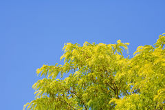 Yellow Tree Stock Image