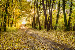 Yellow tree in the autumn park Royalty Free Stock Photo