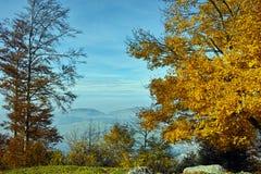Yellow tree and blue sky near mount Rigi, Alps, Switzerland Royalty Free Stock Photos