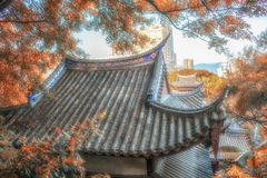 Yellow tree and Chinese ancient architecture royalty free stock image