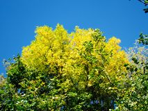 Yellow tree crowns Stock Photo