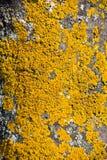 Yellow tree crust. Stock Photos
