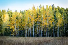 Yellow Tree during Day Time Royalty Free Stock Images