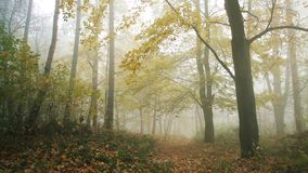 Yellow tree in the forest with nature sounds. Yellow tree in the fogy forest autumn with nature sounds stock video footage