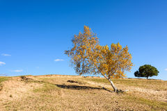 yellow tree on the hill Royalty Free Stock Image
