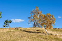 yellow tree on the hill Stock Photography