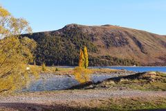 Yellow Tree on Lake With Brown Mountain Background Photo Stock Image