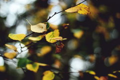 Yellow Tree Leaf Under White Sky during Daytime in Shallow Focus Photography Stock Photo