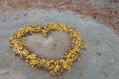 Yellow tree leaves Royalty Free Stock Photos