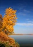 Yellow tree near river Stock Image