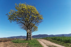 Yellow tree with raised hide. And blue sky Royalty Free Stock Photos