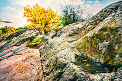 Yellow tree on the rocks with a puddle Stock Photography